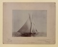 The Yacht Shamrock (HS85-10-10879) original.tif