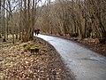 The path through Strid Wood - geograph.org.uk - 1750114.jpg