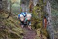 This trail leads to the pass. The dense mixed forest, Makalu Barun National Park. - panoramio.jpg