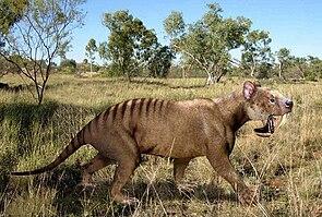 Thylacosmilus, links im Hintergrund Glyptodon
