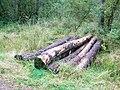 Timber bridge - geograph.org.uk - 566100.jpg
