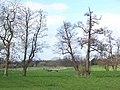 Towards Smestow Brook, Trysull - geograph.org.uk - 368784.jpg