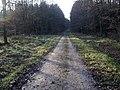 Track, Morning Springs wood - geograph.org.uk - 312072.jpg