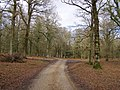 Track through Broomy Inclosure, New Forest - geograph.org.uk - 336046.jpg