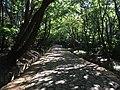 Trail between Bulguksa and Seokguram.jpg