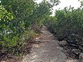 Trail from Biscayne visitor center.JPG