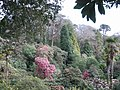 Trebah gardens - geograph.org.uk - 746656.jpg