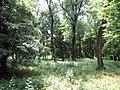 Trebisov Andrassyovsky kastiel (park)-09.JPG