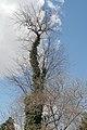 Tree (3354694387).jpg