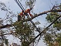 Tree Cutting after Cyclone Fani by two persons.jpg