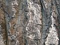 Tree bark pattern.jpg