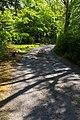 Tree shadows on Milltown Hill - geograph.org.uk - 1093108.jpg