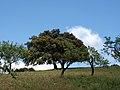 Trees in Álora.jpg