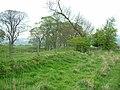 Trees near Keepwick Farm - geograph.org.uk - 417773.jpg