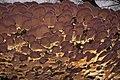 Trichaptum biforme (Fr.) Ryvarden 246798.jpg