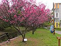 Tsinghua University 清大 - panoramio.jpg