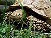 Turtle head.jpg