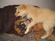 Dog Friendly Biting