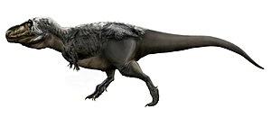 1905 in paleontology - Tyrannosaurus