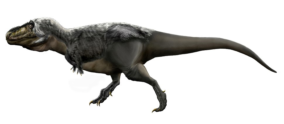 Tyrannosaurus rex by durbed