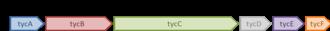 Tyrocidine - Figure 2: The tyrocidine operon