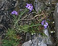 Unid. flower - Flickr - S. Rae (4).jpg