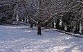 University Park MMB «B6.jpg