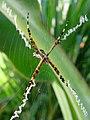 Unknown Spider Brazil.jpg