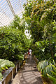 Upper walkway inside Palm House at Kew Gardens.jpg