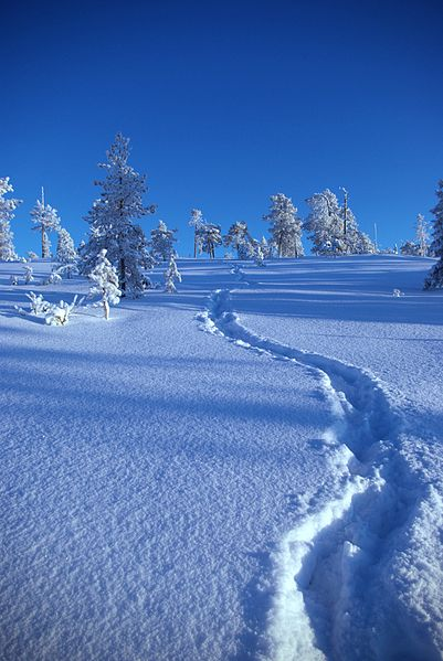 File:Upwards snow path.jpg