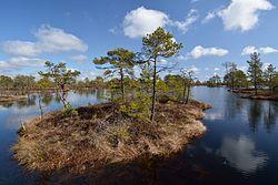 Väike-Loosalu järv2.jpg
