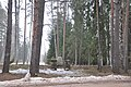 Vācu karavīru brāļu kapi (Ehrenfriedhof Sille) WWI, Tīnūžu pagasts, Ikšķiles novads, Latvia - panoramio.jpg