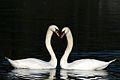 Valentine day (4355165271).jpg