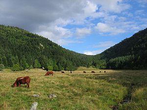 Livradois-Forez Regional Natural Park - Image: Vallée glaciaire du Fossat Forez France