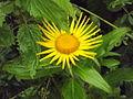 Valley of Flowers National Park 09.JPG