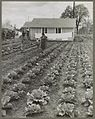 Vegetable garden in camp.jpg