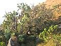 Vegetation - Mount Gurungue (10313125173).jpg