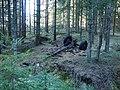 Veien til Stomnås - panoramio (3).jpg