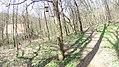 Verőce, 2621 Hungary - panoramio (68).jpg