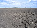 Very large ploughed field, Morris Fen, Thorney, Cambs - geograph.org.uk - 62776.jpg