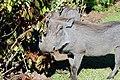 Victoria Falls 2012 05 24 1586 (7421898354).jpg