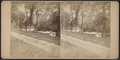 View in Katanoh, N.Y, by Folsom, E.S. (Edward Swazey), 1844-1909.png