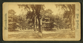View of a tree-lined street, from Robert N. Dennis collection of stereoscopic views.png