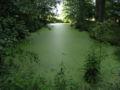 Visingso carp ponds1.jpg