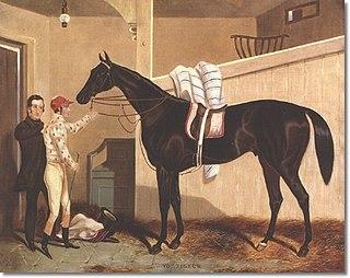 Voltigeur (horse) British-bred Thoroughbred racehorse