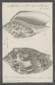 Voluta peltis serpentis - - Print - Iconographia Zoologica - Special Collections University of Amsterdam - UBAINV0274 087 04 0006.tif