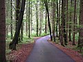 Wald bei Blindenau - geo.hlipp.de - 10406.jpg
