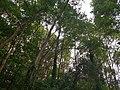 Wald im Wolfstalflur Tauberbischofsheim 04.jpg