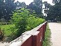 Wall of Rajshahi University.jpeg