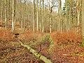 Wanderweg im Bergpark Wilhelmshöhe - panoramio.jpg